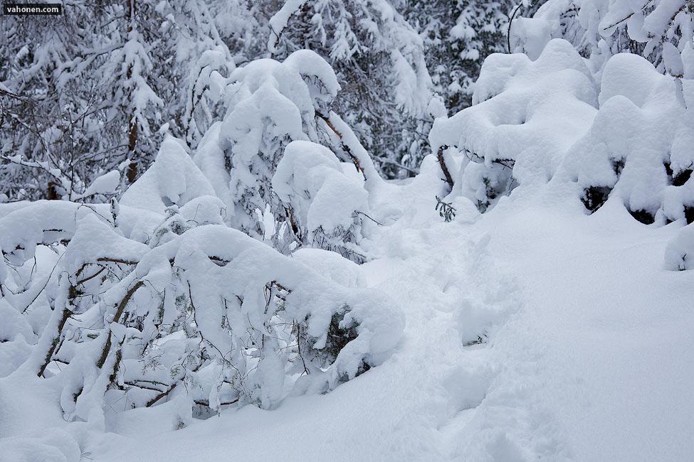 Snowy Woods 4