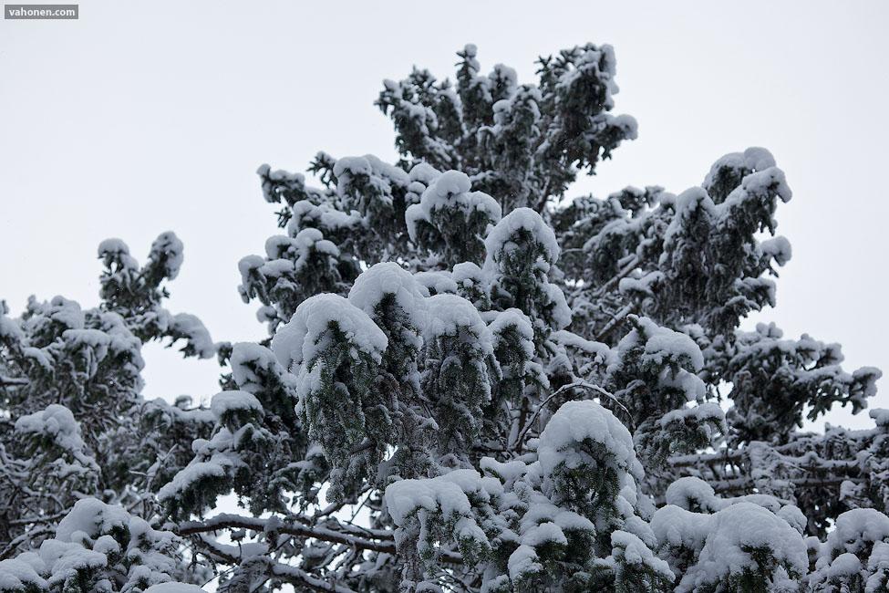 Snowy Woods 3