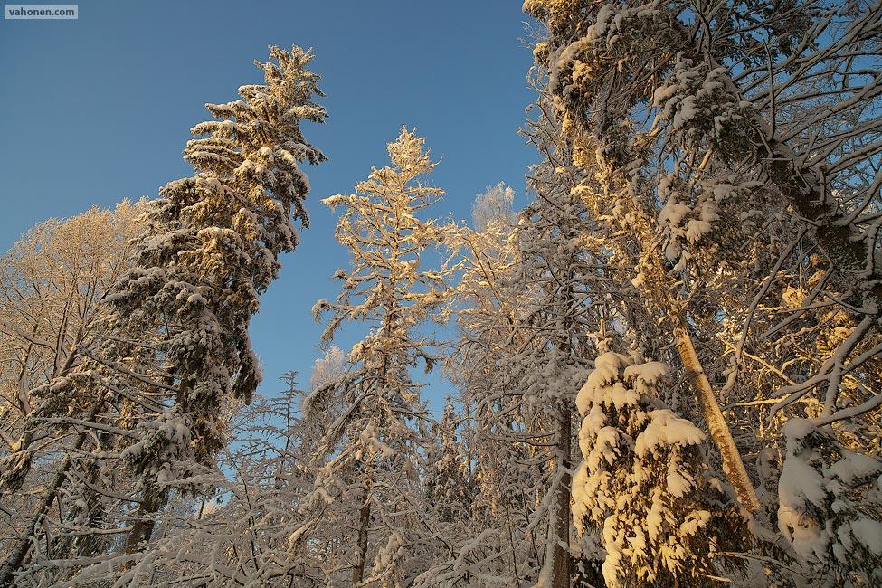 Vuores in snow 3